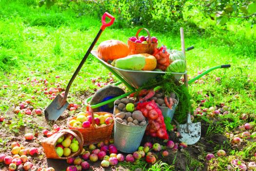 frukty-v-sadu