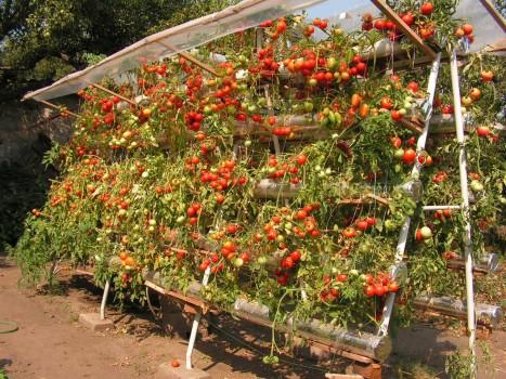 Урожай на даче 14