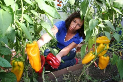 Урожай на даче 3