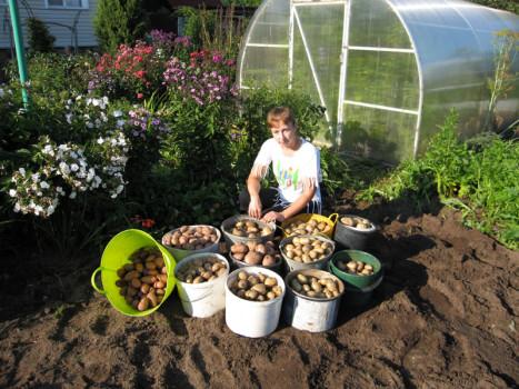 Урожай на даче 5