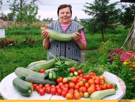 Урожай на даче 8