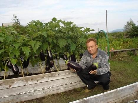 Урожай на даче 13