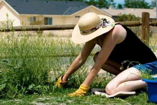 Женщина убирает траву